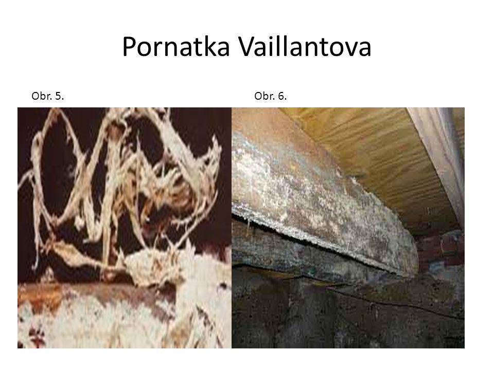 Pornatka Vaillantova Obr. 5. Obr. 6.