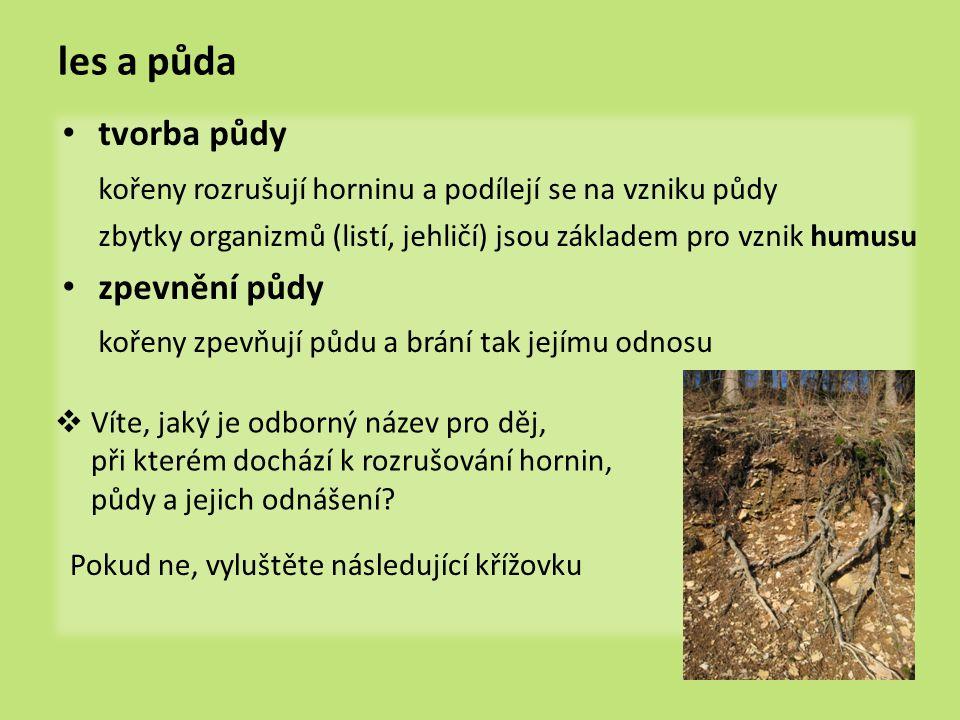 les a půda tvorba půdy kořeny rozrušují horninu a podílejí se na vzniku půdy zbytky organizmů (listí, jehličí) jsou základem pro vznik humusu zpevnění