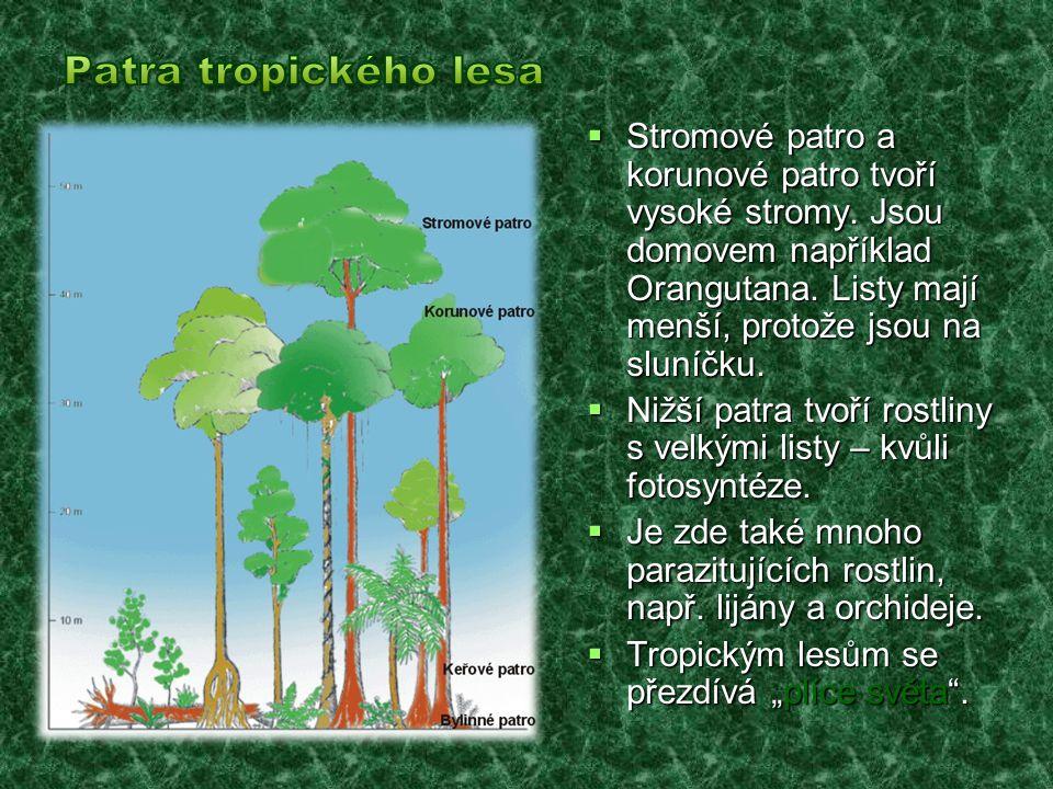  Stromové patro a korunové patro tvoří vysoké stromy. Jsou domovem například Orangutana. Listy mají menší, protože jsou na sluníčku.  Nižší patra tv