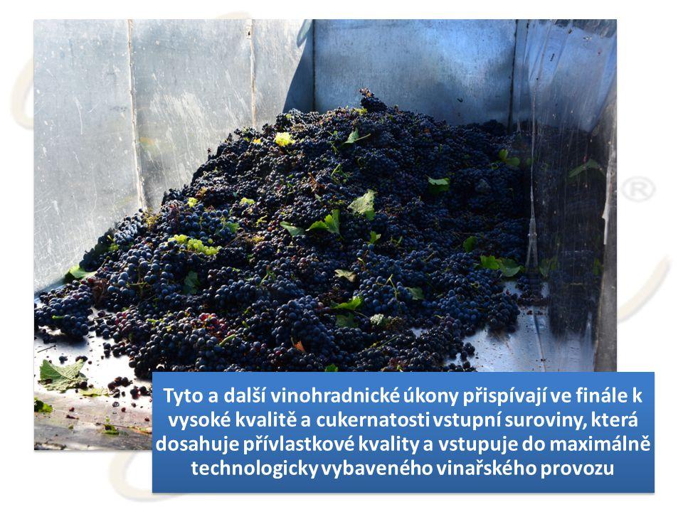 Tyto a další vinohradnické úkony přispívají ve finále k vysoké kvalitě a cukernatosti vstupní suroviny, která dosahuje přívlastkové kvality a vstupuje do maximálně technologicky vybaveného vinařského provozu