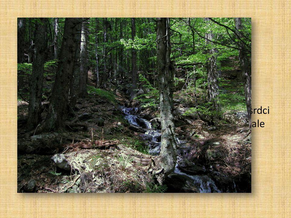  Více než třetinu JK zabírají lesy Boubínský prales je unikátní rezervace v samém srdci Šumavy. Některé stromy tu jsou staré až 400 let, ale samotný