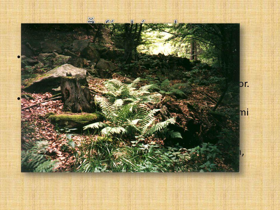 Chráněné území Žofínský prales je zařazené do nejvyšší kategorie ochrany - národní přírodní rezervace. Leží ve střední části Novohradských hor. Žofíns