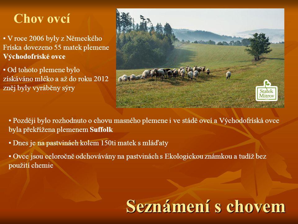 Seznámení s chovem Chov ovcí V roce 2006 byly z Německého Fríska dovezeno 55 matek plemene Východofríské ovce Od tohoto plemene bylo získáváno mléko a