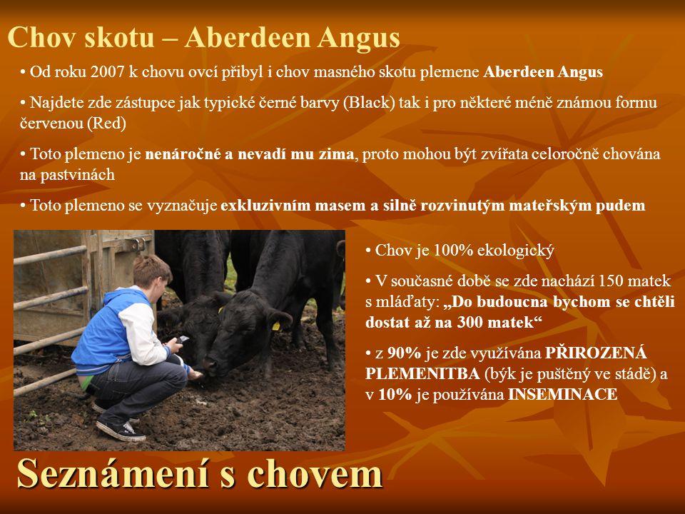 Seznámení s chovem Chov skotu – Aberdeen Angus Od roku 2007 k chovu ovcí přibyl i chov masného skotu plemene Aberdeen Angus Najdete zde zástupce jak t