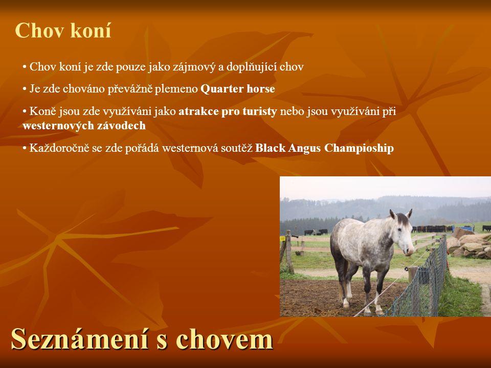 Seznámení s chovem Chov koní Chov koní je zde pouze jako zájmový a doplňující chov Je zde chováno převážně plemeno Quarter horse Koně jsou zde využívá