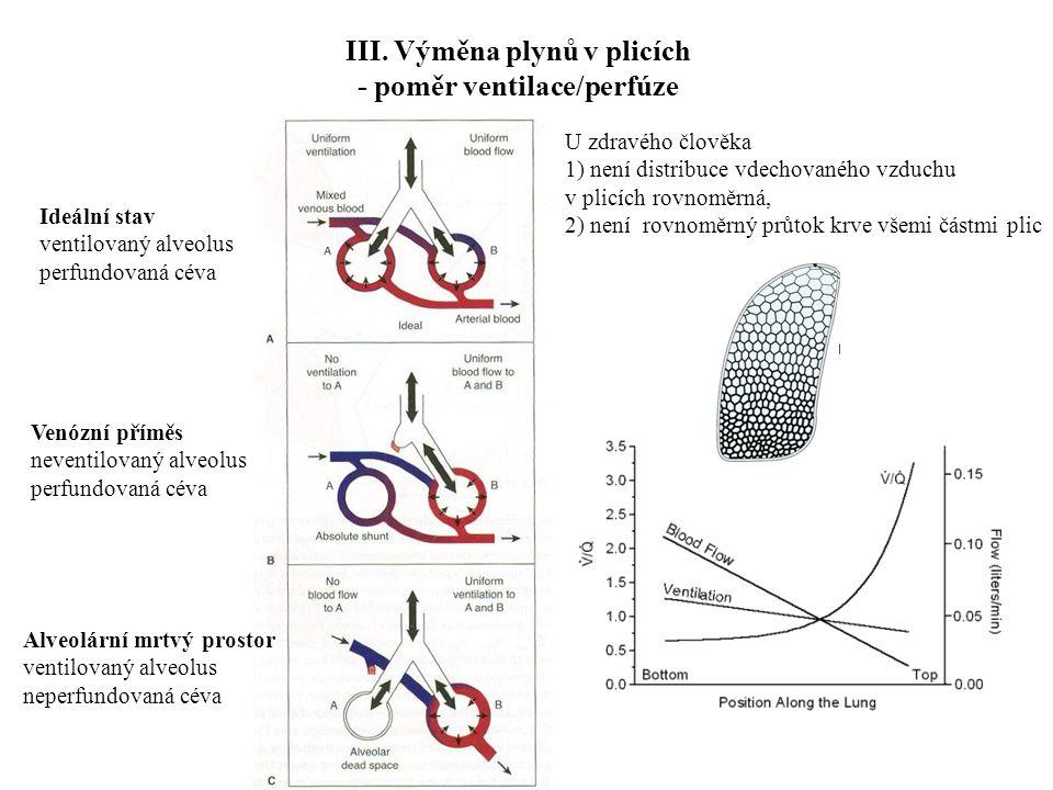III. Výměna plynů v plicích - poměr ventilace/perfúze Ideální stav ventilovaný alveolus perfundovaná céva Alveolární mrtvý prostor ventilovaný alveolu