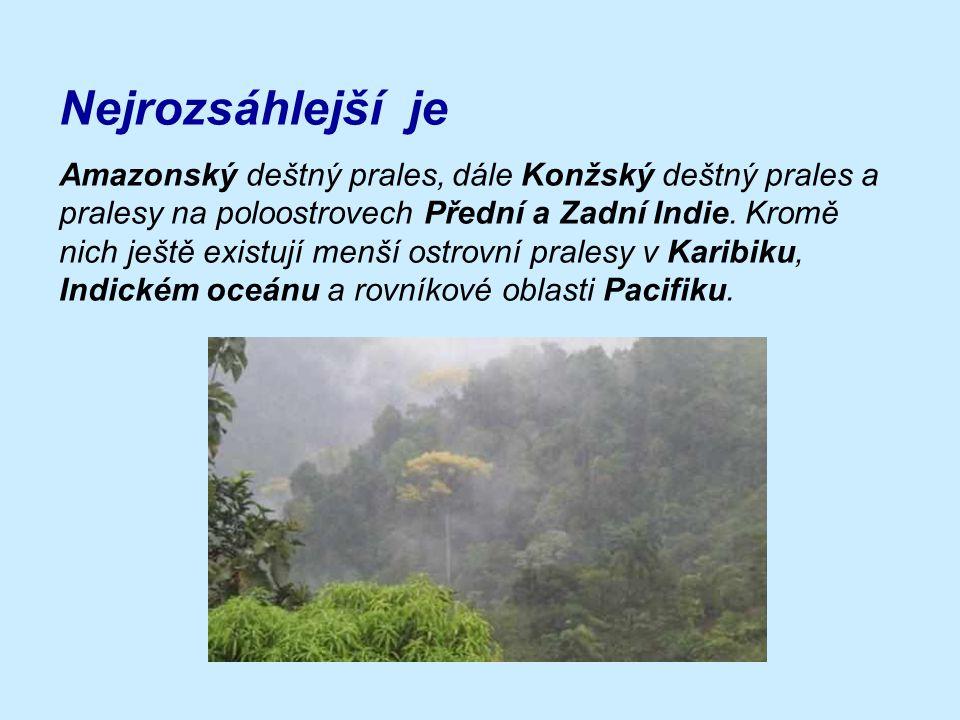 - nachází se v tropickém podnebném pásu - je zde teplo a vlhko - největší množství rostlinných a živočišných druhů na pevnině - v průběhu roku prales nemění svůj vzhled