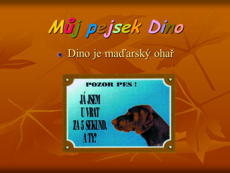 Můj pejsek Dino Dino je maďarský ohař Dino je maďarský ohař