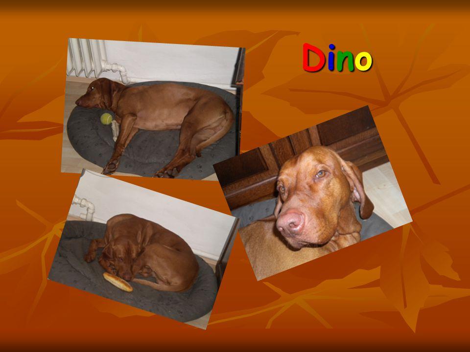 DinoDinoDinoDino
