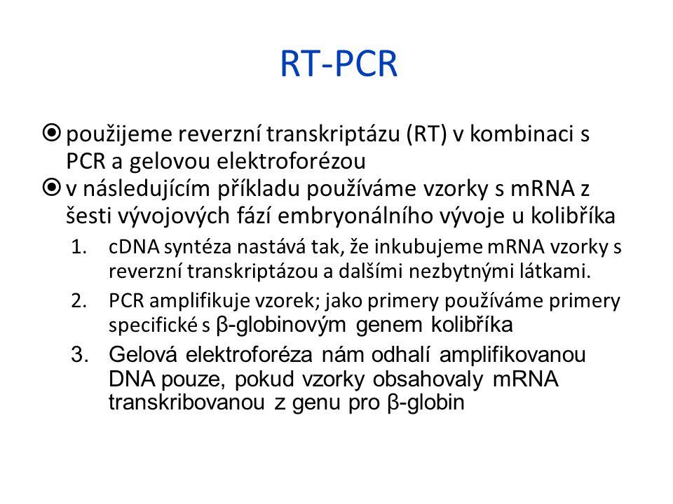 RT-PCR  použijeme reverzní transkriptázu (RT) v kombinaci s PCR a gelovou elektroforézou  v následujícím příkladu používáme vzorky s mRNA z šesti vý