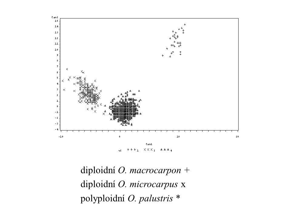 diploidní O. macrocarpon + diploidní O. microcarpus x polyploidní O. palustris *