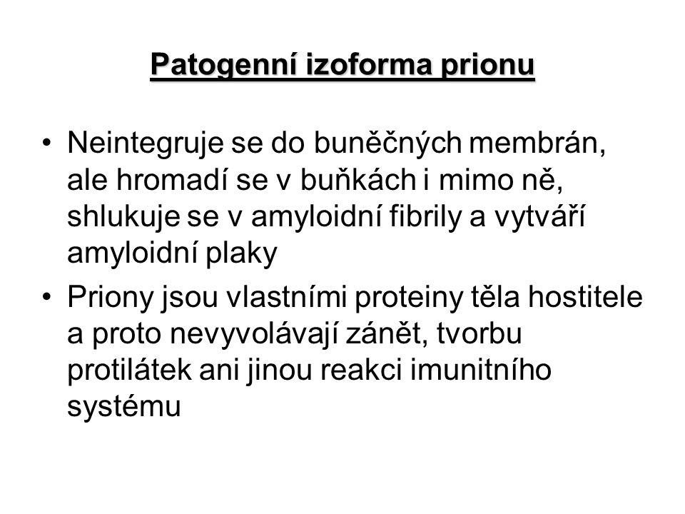 Patogenní izoforma prionu Neintegruje se do buněčných membrán, ale hromadí se v buňkách i mimo ně, shlukuje se v amyloidní fibrily a vytváří amyloidní