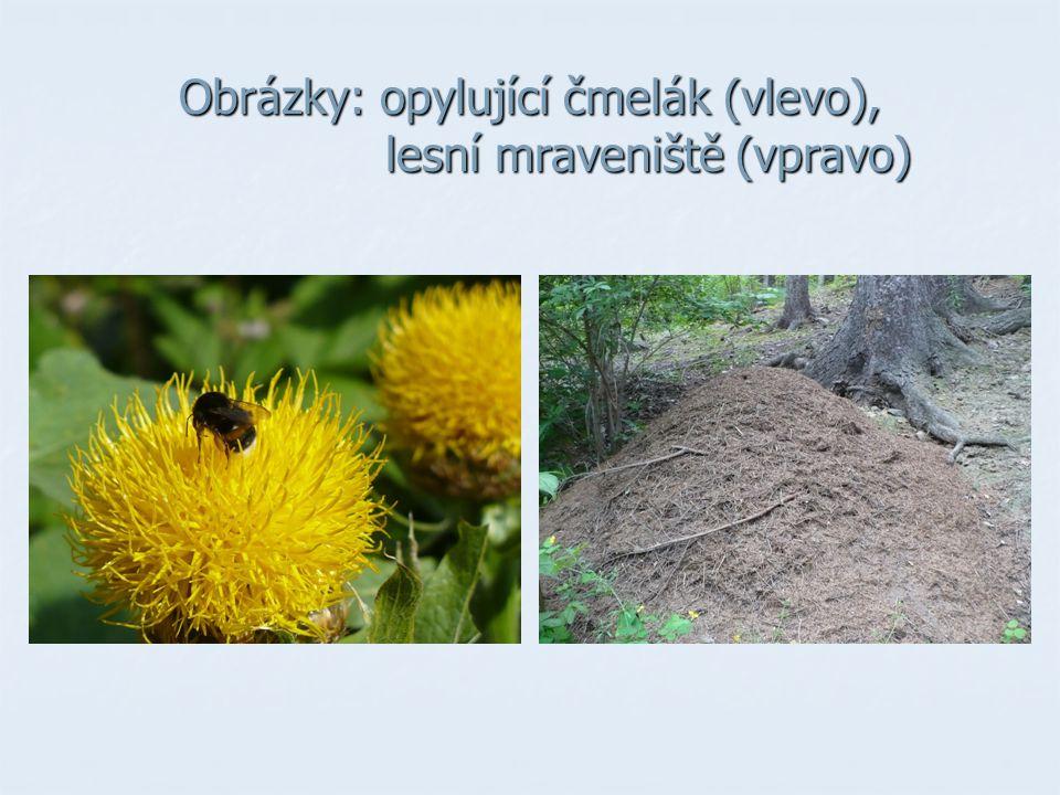 Obrázky: opylující čmelák (vlevo), lesní mraveniště (vpravo)