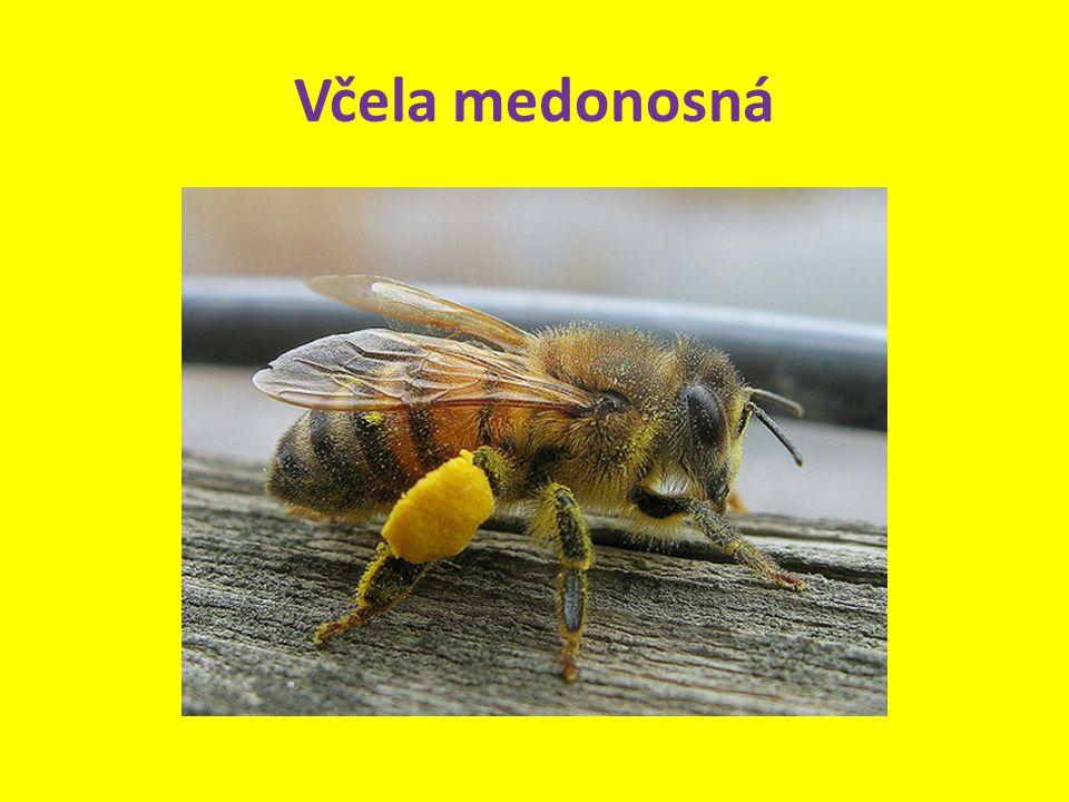 Žijí pospolitě v úlech.