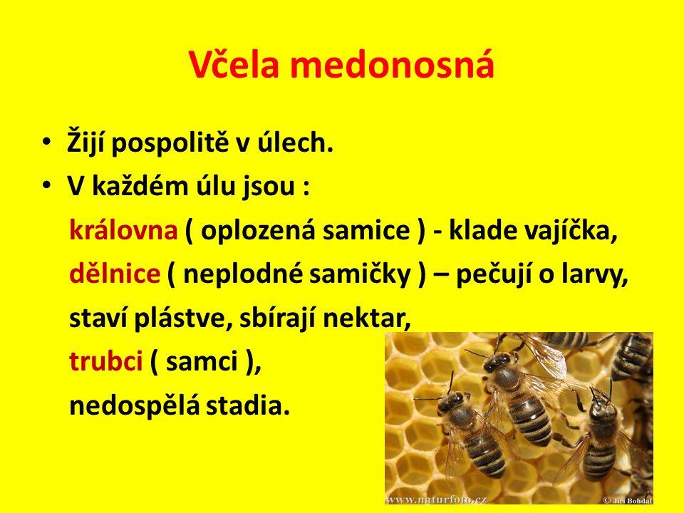 Žijí pospolitě v úlech. V každém úlu jsou : královna ( oplozená samice ) - klade vajíčka, dělnice ( neplodné samičky ) – pečují o larvy, staví plástve