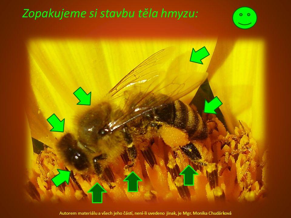 Zopakujeme si stavbu těla hmyzu: Autorem materiálu a všech jeho částí, není-li uvedeno jinak, je Mgr.