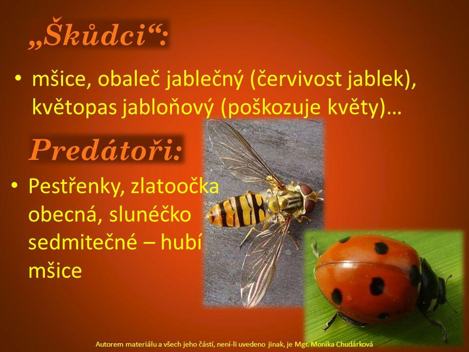 Jiný hmyz: mandelinka nádherná perleťovec čmelák zahradní kobylka zelená dravá ploštice - kněžice Autorem materiálu a všech jeho částí, není-li uvedeno jinak, je Mgr.