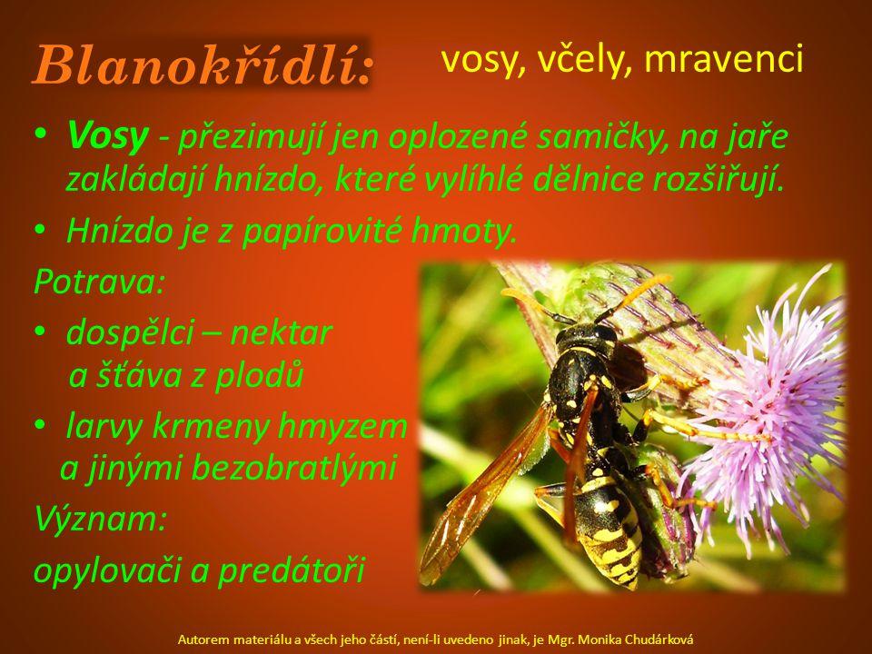 Blanokřídlí: vosy, včely, mravenci Vosy - přezimují jen oplozené samičky, na jaře zakládají hnízdo, které vylíhlé dělnice rozšiřují.