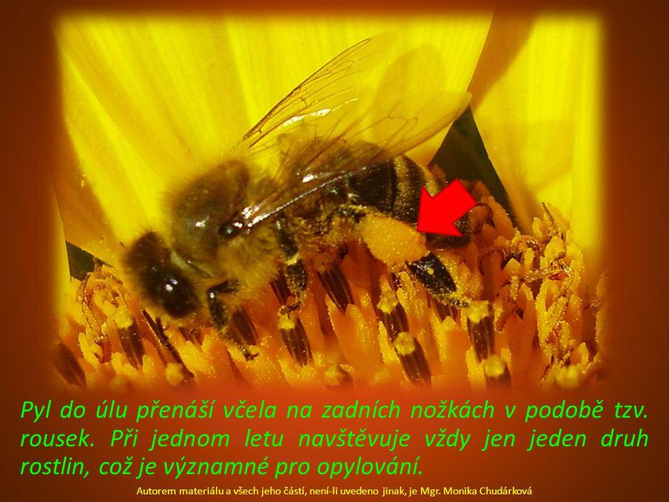 Pyl do úlu přenáší včela na zadních nožkách v podobě tzv.