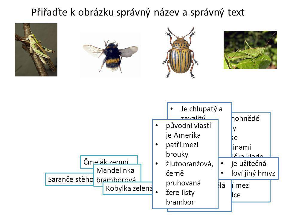 Přiřaďte k obrázku správný název a správný text Čmelák zemní Saranče stěhovavá Mandelinka bramborová Kobylka zelená zelenohnědé barvy živí se rostlina