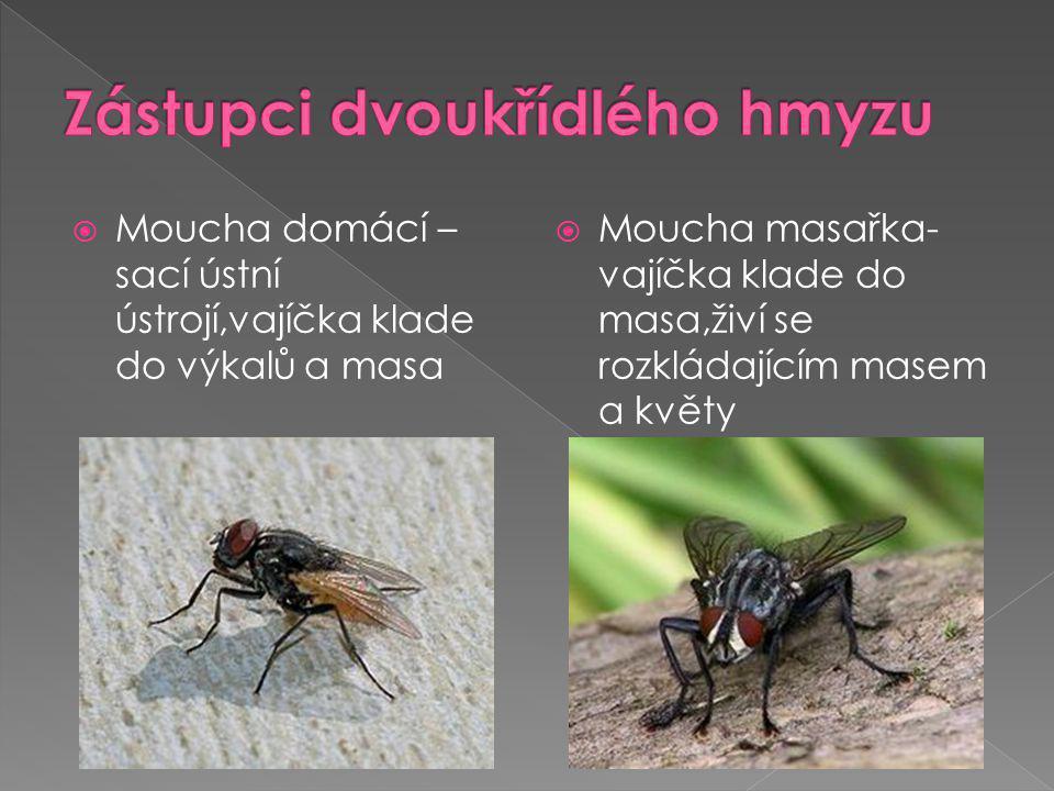 octomilka obecná – vajíčka klade do ovoce,červené oči,používaná k laboratorním účelům  moucha tse tse – původce spavé nemoci, živí se sáním krve, larvy se vyvíjejí v těle samičky do třetího svlékání
