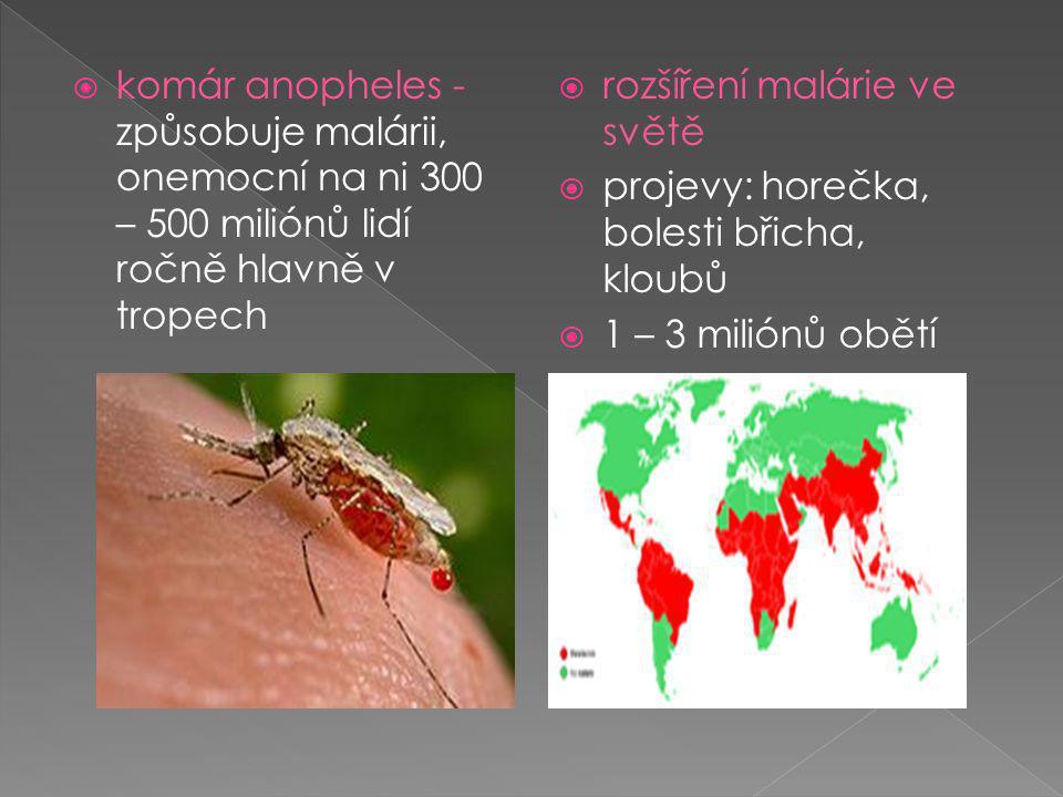  komár anopheles - způsobuje malárii, onemocní na ni 300 – 500 miliónů lidí ročně hlavně v tropech  rozšíření malárie ve světě  projevy: horečka, bolesti břicha, kloubů  1 – 3 miliónů obětí