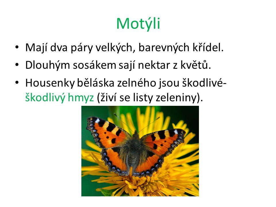 Motýli Mají dva páry velkých, barevných křídel. Dlouhým sosákem sají nektar z květů. Housenky běláska zelného jsou škodlivé- škodlivý hmyz (živí se li