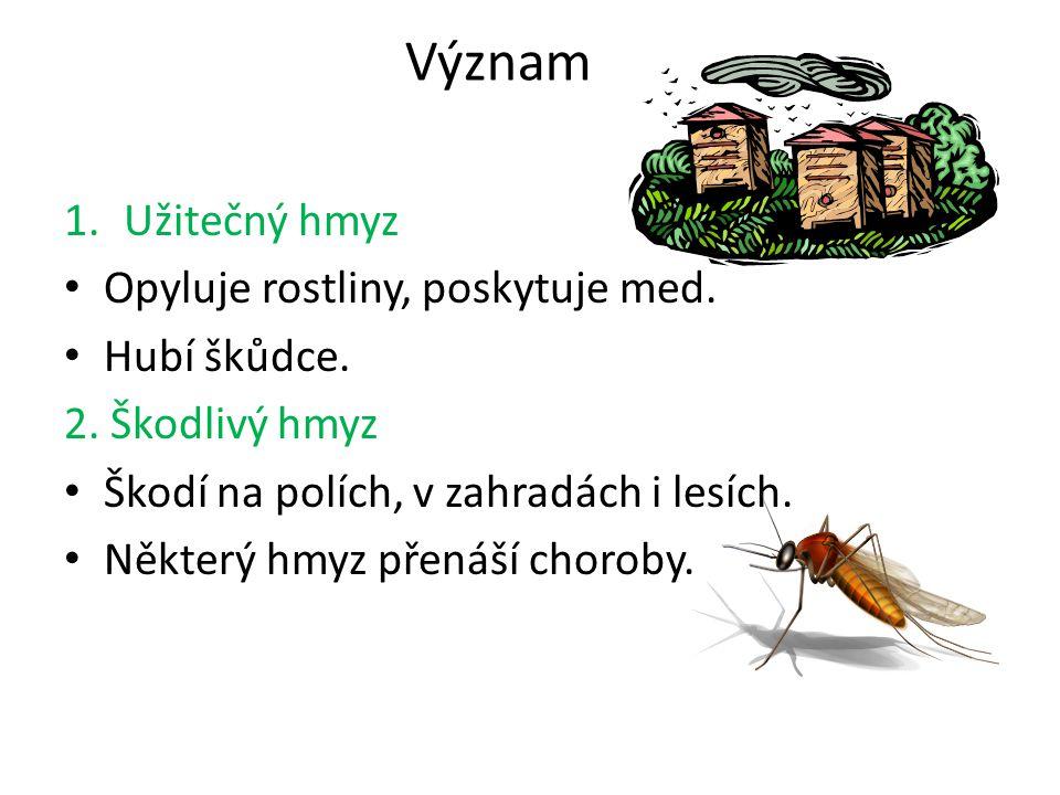 Význam 1.Užitečný hmyz Opyluje rostliny, poskytuje med. Hubí škůdce. 2. Škodlivý hmyz Škodí na polích, v zahradách i lesích. Některý hmyz přenáší chor