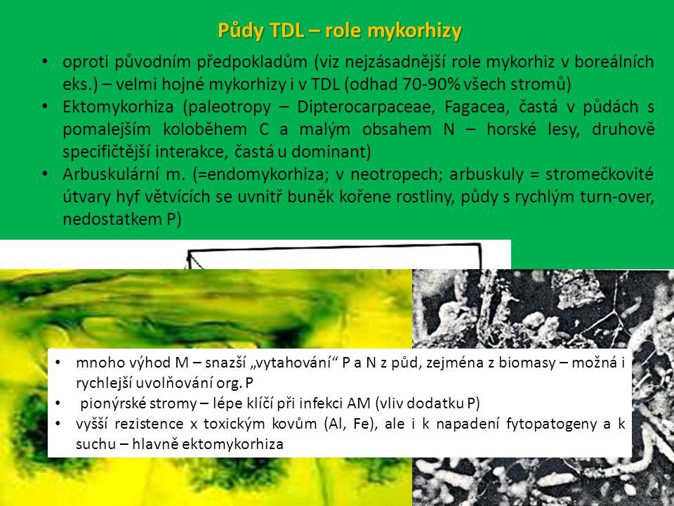 Půdy TDL – role mykorhizy oproti původním předpokladům (viz nejzásadnější role mykorhiz v boreálních eks.) – velmi hojné mykorhizy i v TDL (odhad 70-90% všech stromů) Ektomykorhiza (paleotropy – Dipterocarpaceae, Fagacea, častá v půdách s pomalejším koloběhem C a malým obsahem N – horské lesy, druhově specifičtější interakce, častá u dominant) Arbuskulární m.