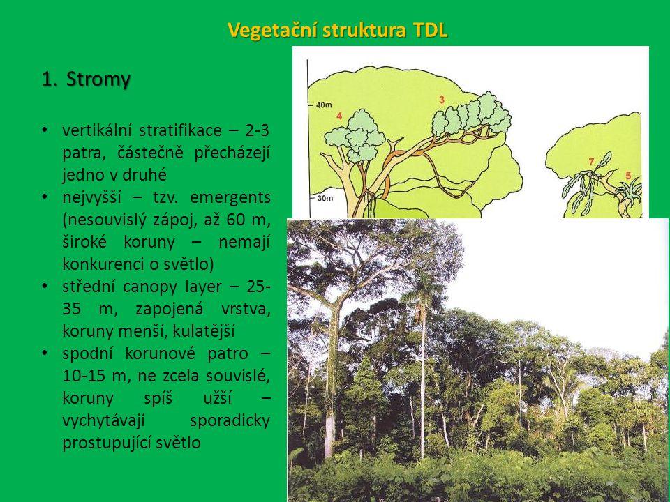 Vegetační struktura TDL 1.Stromy vertikální stratifikace – 2-3 patra, částečně přecházejí jedno v druhé nejvyšší – tzv.