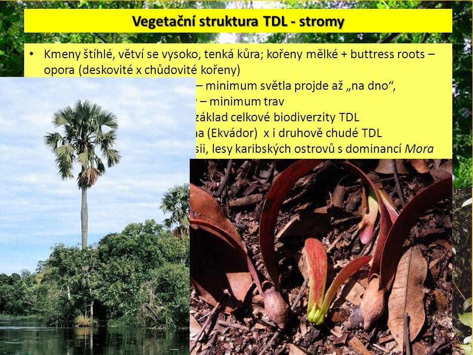 """Vegetační struktura TDL - stromy Kmeny štíhlé, větví se vysoko, tenká kůra; kořeny mělké + buttress roots – opora (deskovité x chůdovité kořeny) málo vyvinuté bylinné patro – minimum světla projde až """"na dno , kompetice se stromy o živiny – minimum trav obrovská diverzita stromů – základ celkové biodiverzity TDL více než 400 druhů stromů/ha (Ekvádor) x i druhově chudé TDL (dvoukřídláčové lesy v Malajsii, lesy karibských ostrovů s dominancí Mora excelsa aj."""