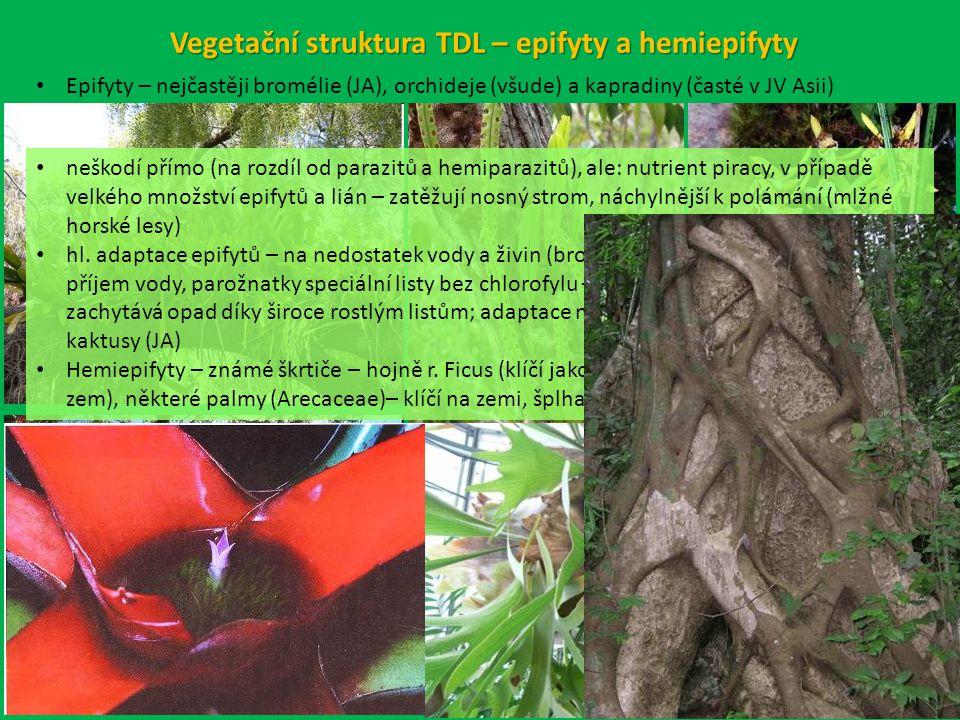 Vegetační struktura TDL – epifyty a hemiepifyty Epifyty – nejčastěji bromélie (JA), orchideje (všude) a kapradiny (časté v JV Asii) neškodí přímo (na rozdíl od parazitů a hemiparazitů), ale: nutrient piracy, v případě velkého množství epifytů a lián – zatěžují nosný strom, náchylnější k polámání (mlžné horské lesy) hl.