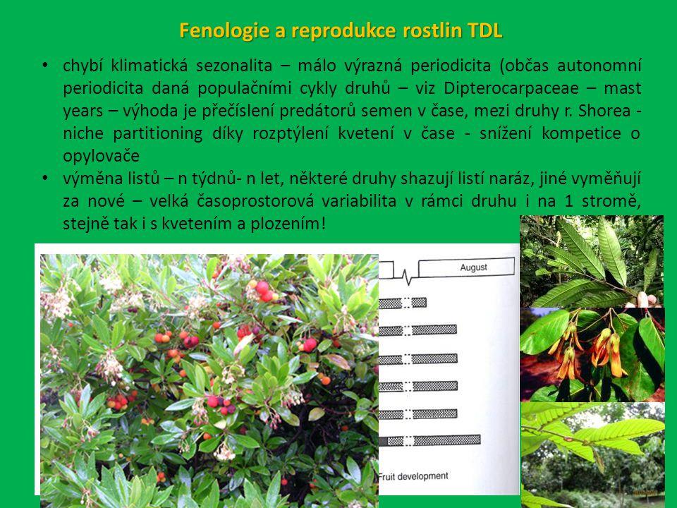 Fenologie a reprodukce rostlin TDL chybí klimatická sezonalita – málo výrazná periodicita (občas autonomní periodicita daná populačními cykly druhů – viz Dipterocarpaceae – mast years – výhoda je přečíslení predátorů semen v čase, mezi druhy r.