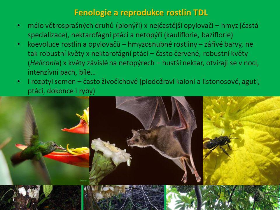 málo větrosprašných druhů (pionýři) x nejčastější opylovači – hmyz (častá specializace), nektarofágní ptáci a netopýři (kauliflorie, baziflorie) koevoluce rostlin a opylovačů – hmyzosnubné rostliny – zářivé barvy, ne tak robustní květy x nektarofágní ptáci – často červené, robustní květy (Heliconia) x květy závislé na netopýrech – hustší nektar, otvírají se v noci, intenzívní pach, bílé… i rozptyl semen – často živočichové (plodožraví kaloni a listonosové, aguti, ptáci, dokonce i ryby) Fenologie a reprodukce rostlin TDL