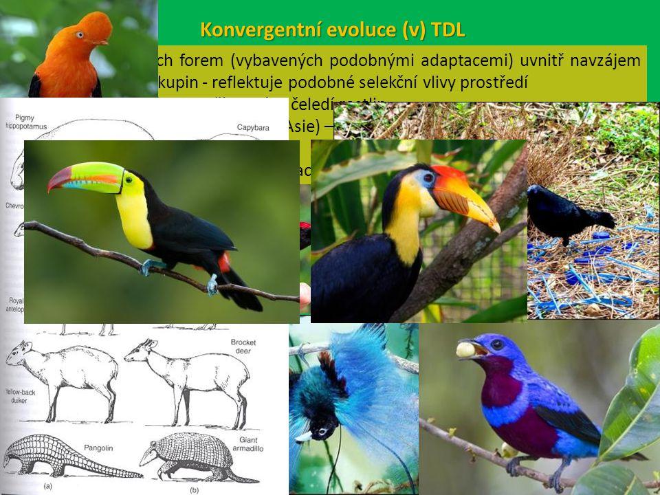 Konvergentní evoluce (v) TDL vývoj podobných forem (vybavených podobnými adaptacemi) uvnitř navzájem nepříbuzných skupin - reflektuje podobné selekční vlivy prostředí např.