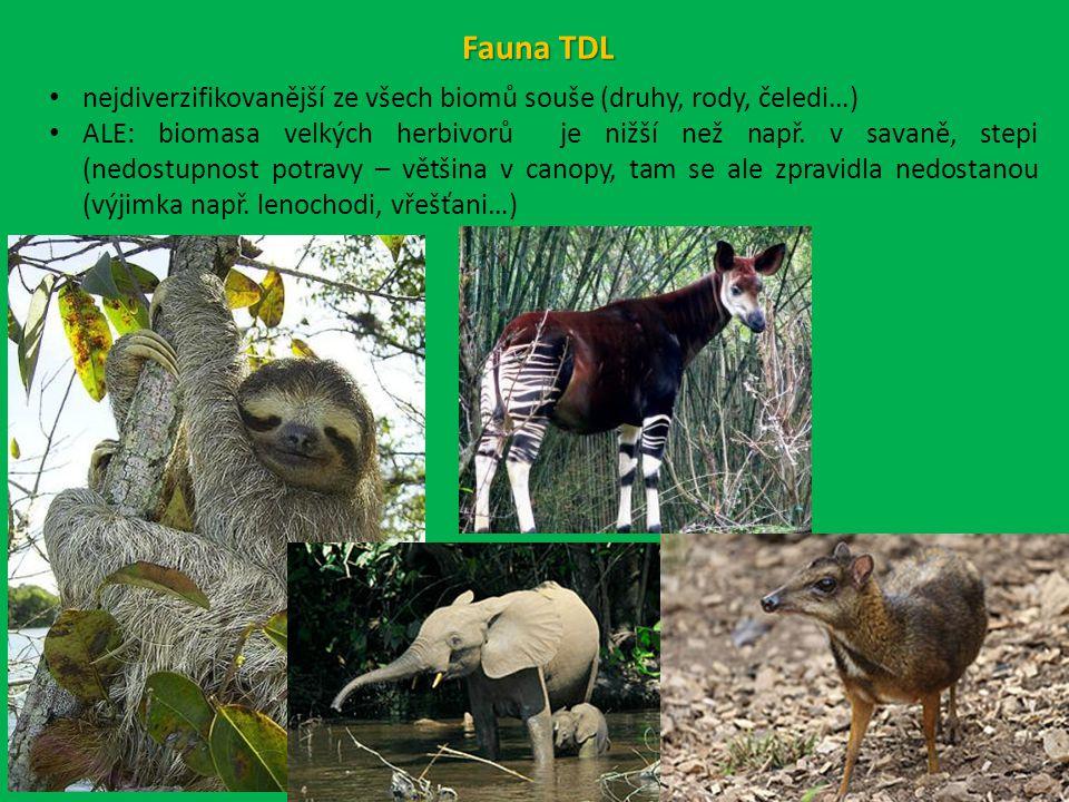 Fauna TDL nejdiverzifikovanější ze všech biomů souše (druhy, rody, čeledi…) ALE: biomasa velkých herbivorů je nižší než např.