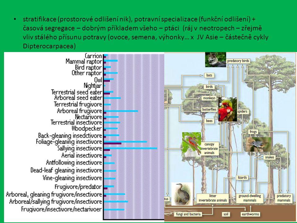 stratifikace (prostorové odlišení nik), potravní specializace (funkční odlišení) + časová segregace – dobrým příkladem všeho – ptáci (ráj v neotropech – zřejmě vliv stálého přísunu potravy (ovoce, semena, výhonky… x JV Asie – částečně cykly Dipterocarpacea)