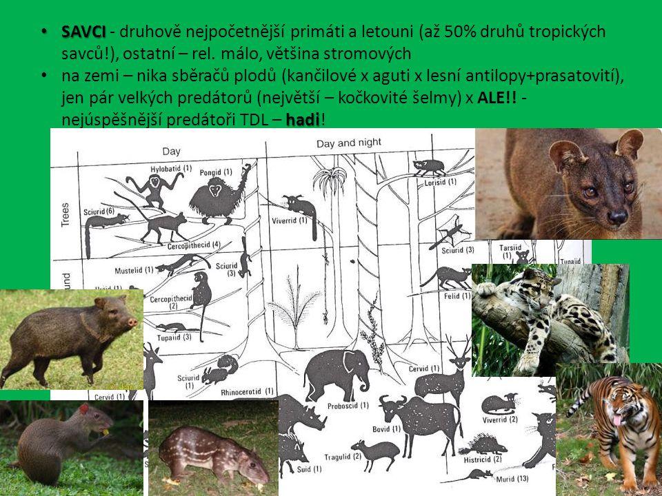 SAVCI SAVCI - druhově nejpočetnější primáti a letouni (až 50% druhů tropických savců!), ostatní – rel.