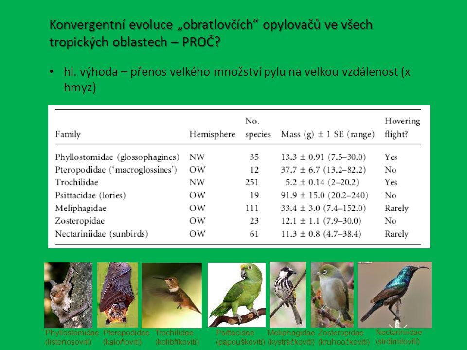 """Phyllostomidae (listonosovití) Pteropodidae (kaloňovití) Trochilidae (kolibříkovití) Psittacidae (papouškovití) Meliphagidae (kystráčkovití) Zosteropidae (kruhoočkovití) Nectariniidae (strdimilovití) Konvergentní evoluce """"obratlovčích opylovačů ve všech tropických oblastech – PROČ."""