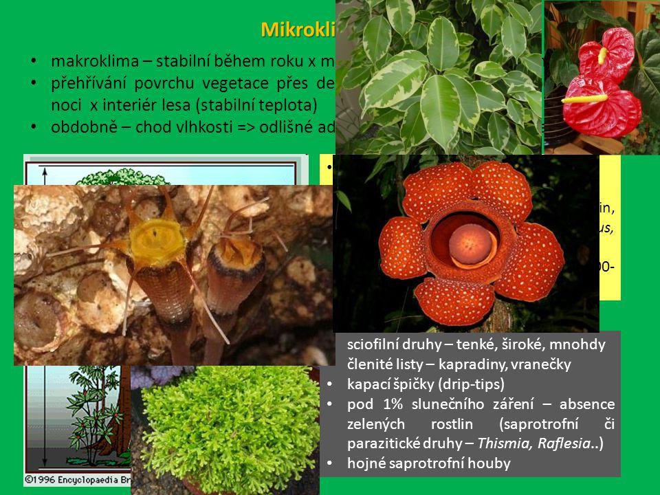 Mikroklima TDL makroklima – stabilní během roku x mikroklima – fluktuace během dne přehřívání povrchu vegetace přes den (=horní část canopy) a ochlazování v noci x interiér lesa (stabilní teplota) obdobně – chod vlhkosti => odlišné adaptace druhů obou mikrostanovišť tuhé, lesklé, xeromorfní listy silná kutikula, i zanořené průduchy často druhy pokojových rostlin, snášející nízkou vzdušnou vlhkost (Ficus, Anthurium…) kolísání teploty až o 15°C, vlhkosti 100- 60% sciofilní druhy – tenké, široké, mnohdy členité listy – kapradiny, vranečky kapací špičky (drip-tips) pod 1% slunečního záření – absence zelených rostlin (saprotrofní či parazitické druhy – Thismia, Raflesia..) hojné saprotrofní houby