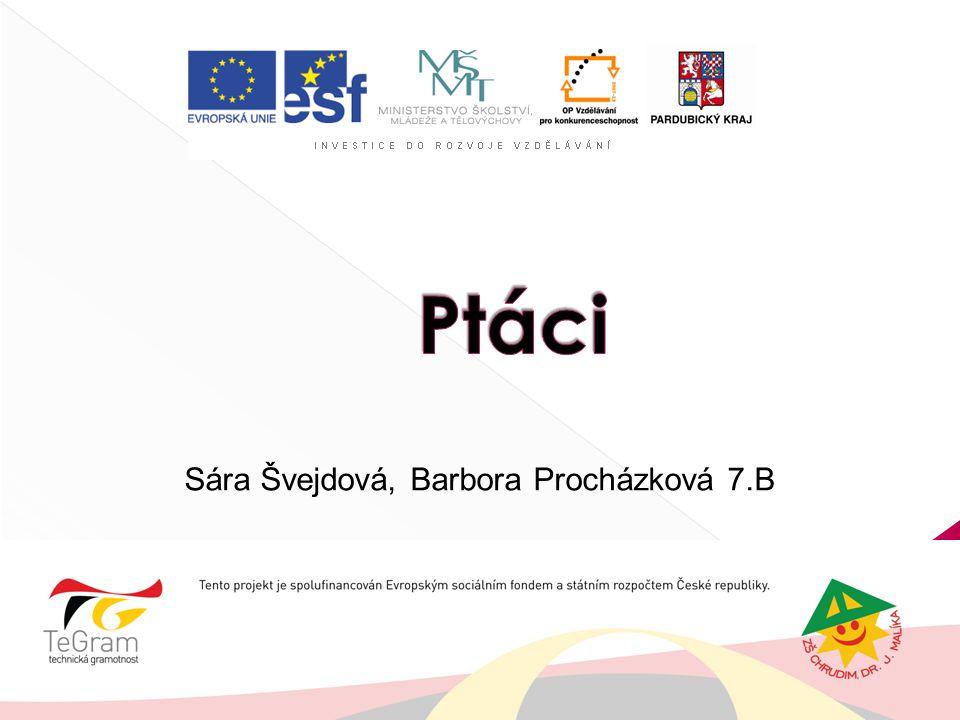Sára Švejdová, Barbora Procházková 7.B