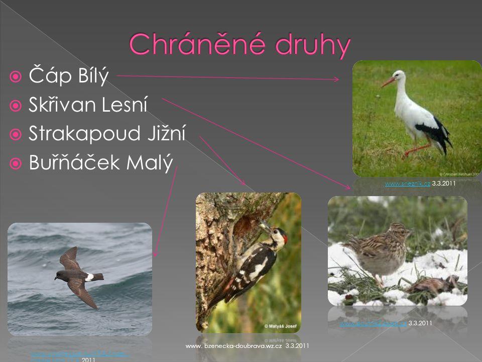  Čáp Bílý  Skřivan Lesní  Strakapoud Jižní  Buřňáček Malý www.sneznik.czwww.sneznik.cz 3.3.2011 www.poutnik2.sweb.czwww.poutnik2.sweb.cz 3.3.2011 www.