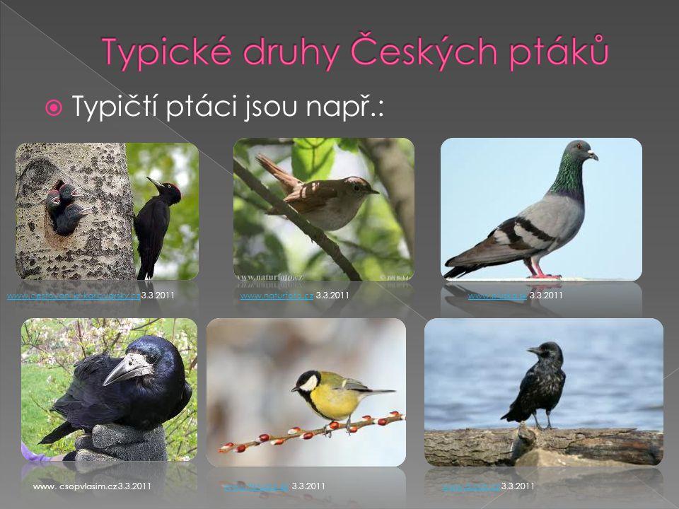  Typičtí ptáci jsou např.: www.cestovani.kr-karlovarsky.czwww.cestovani.kr-karlovarsky.cz 3.3.2011www.naturfoto.czwww.naturfoto.cz 3.3.2011www.pluska.skwww.pluska.sk 3.3.2011 www.