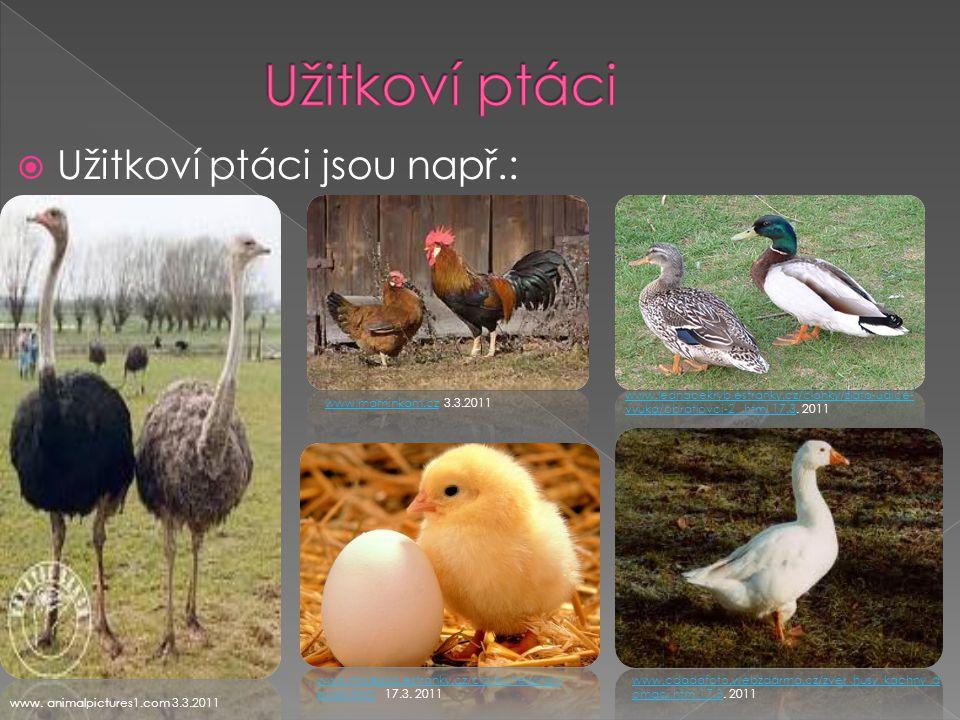  Užitkoví ptáci jsou např.: www.