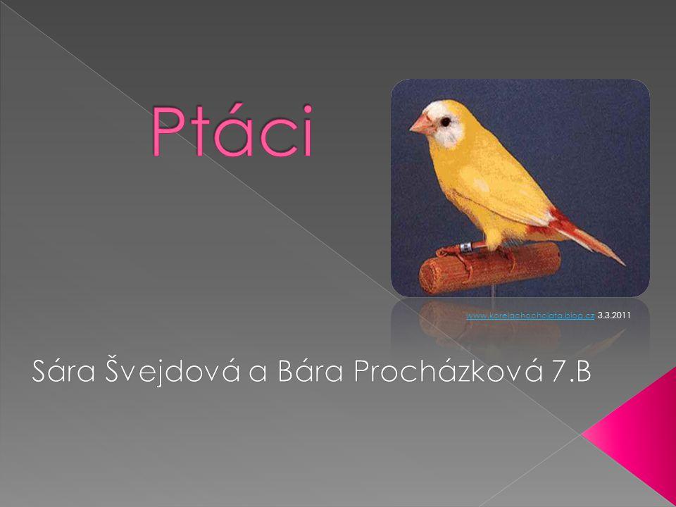 www.korelachocholata.blog.czwww.korelachocholata.blog.cz 3.3.2011