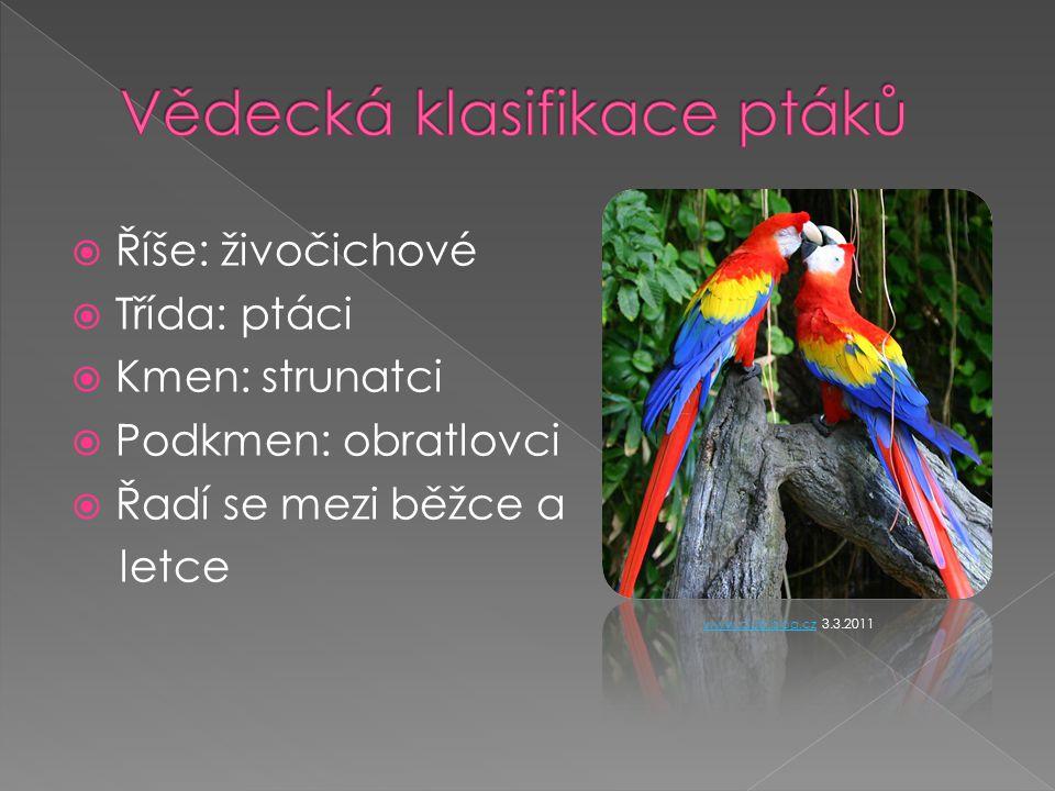  Říše: živočichové  Třída: ptáci  Kmen: strunatci  Podkmen: obratlovci  Řadí se mezi běžce a letce www.club.blog.czwww.club.blog.cz 3.3.2011