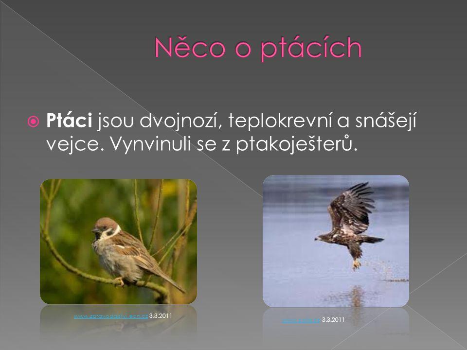  Ptáci jsou dvojnozí, teplokrevní a snášejí vejce.