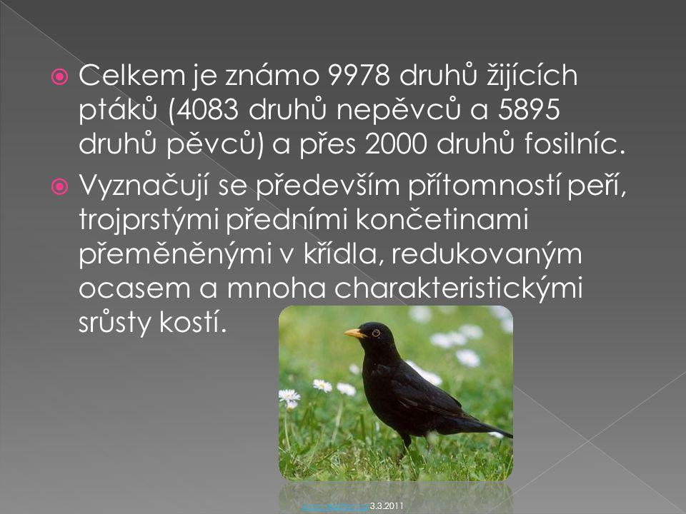  Celkem je známo 9978 druhů žijících ptáků (4083 druhů nepěvců a 5895 druhů pěvců) a přes 2000 druhů fosilníc.