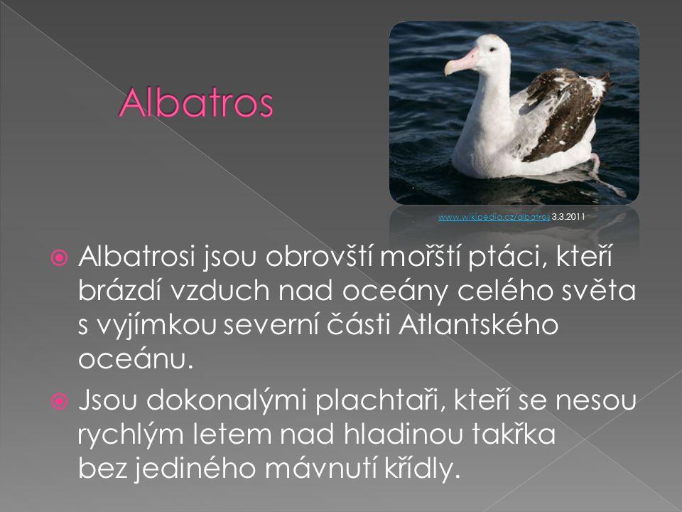  Albatrosi jsou obrovští mořští ptáci, kteří brázdí vzduch nad oceány celého světa s vyjímkou severní části Atlantského oceánu.