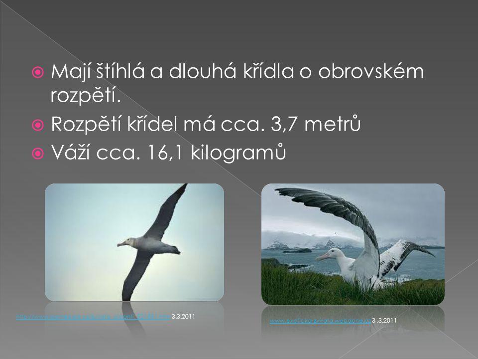  Mají štíhlá a dlouhá křídla o obrovském rozpětí.